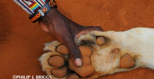 Philip-J-Briggs_Guardian-and-lion-paw1 (full)