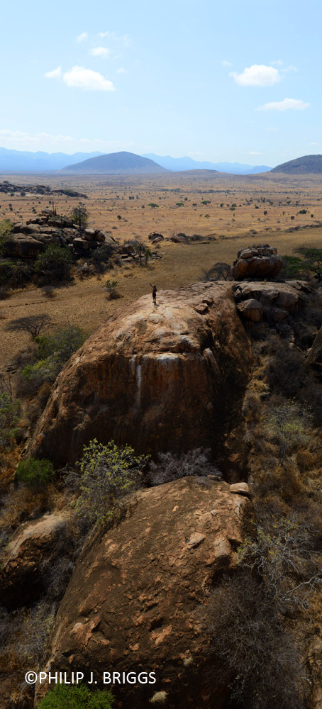 Olubi tracking lions viewed from above.