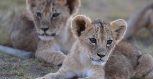 world lion day 3